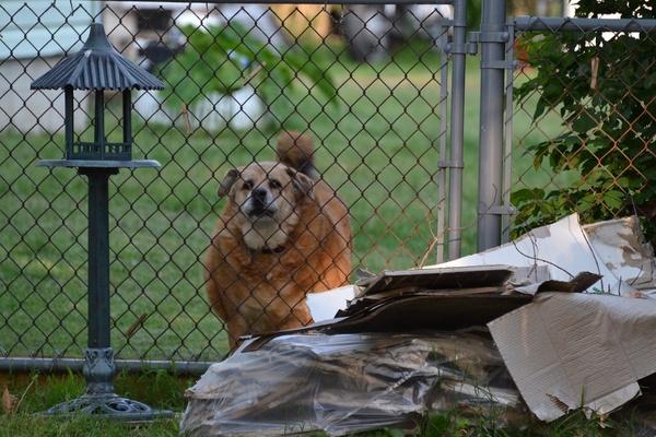 Chubby Doggie