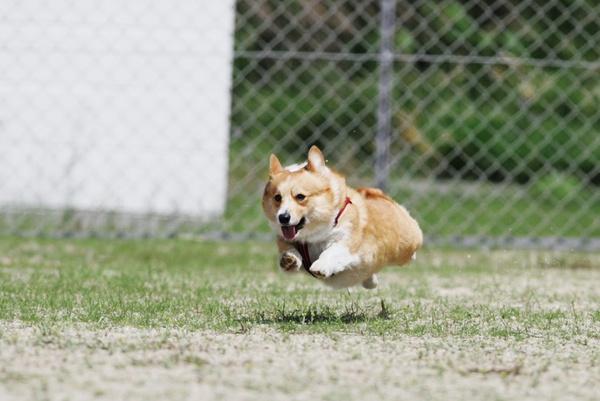 Doggie Gym