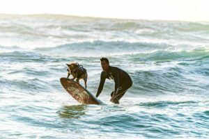 Dog surfing with its owner