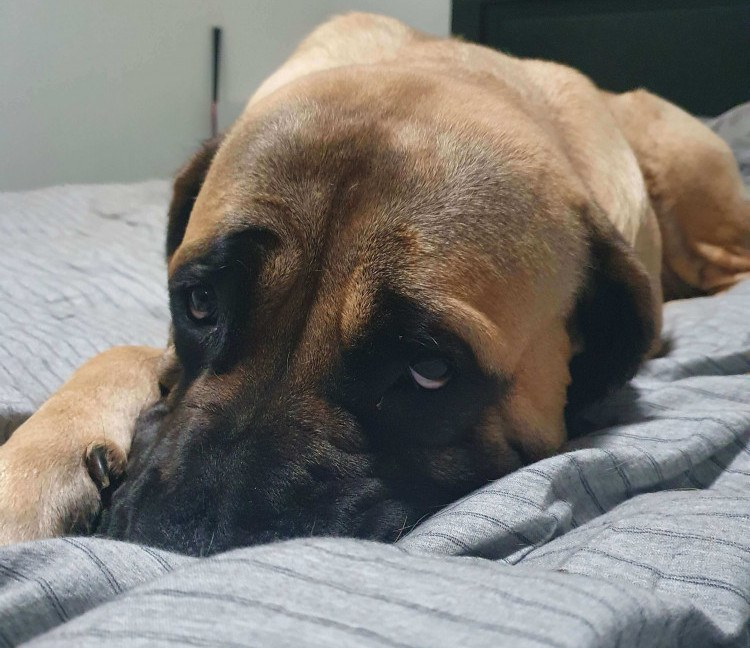 Do I Need To Get My Dog A Dog Bed?
